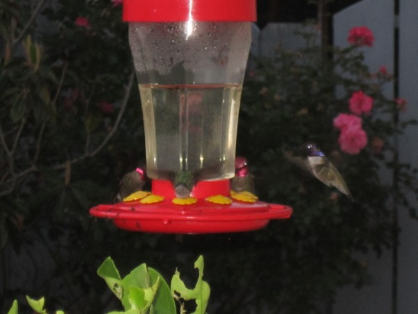 Epic, blurry shot of Hummingbirds