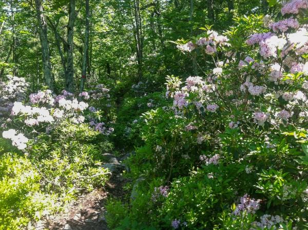 On the Millbrook Mountain Trail