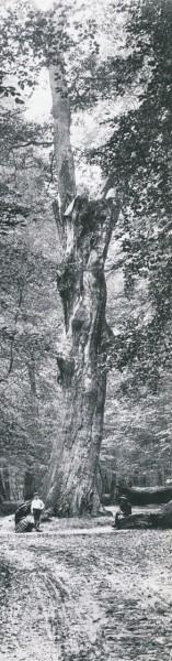 Le Pharamond 1909