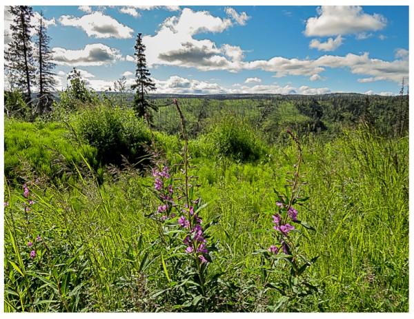 caribou hills
