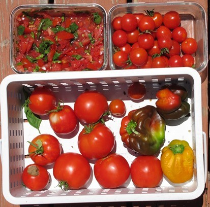 Harvest of tomatoes, cherry tomatoes, & peppers and the products turne...