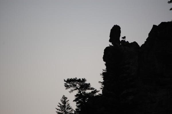 Bitterroot Mts, Montana.