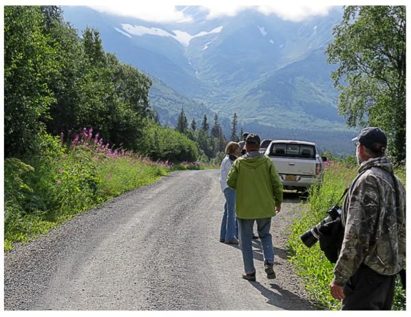 birding the road