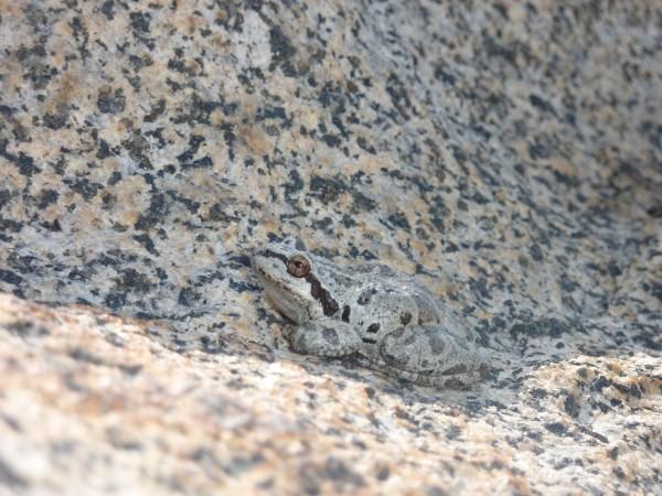 World's most camo frog above Elinor Lake.