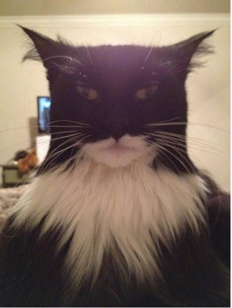 BatCat is here!!