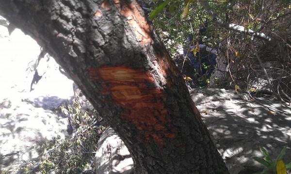 Hacked tree.