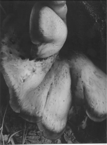 T. Charles Gerughty 1972