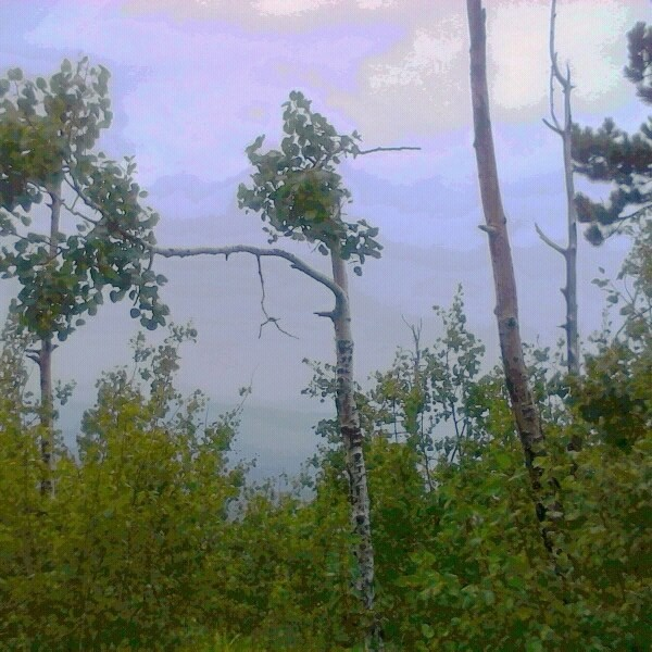 Atop Mt. Lemmon <br/>  <br/> 9/07/13