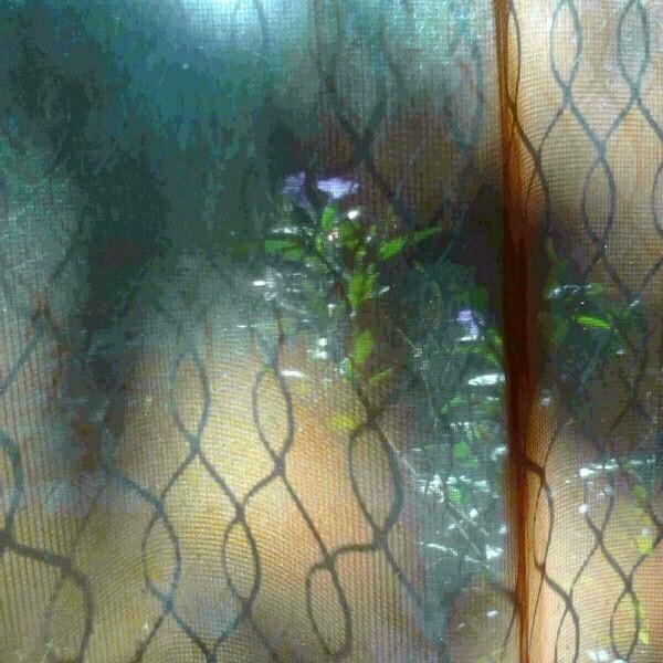 light thru my bedroom door to back yard...