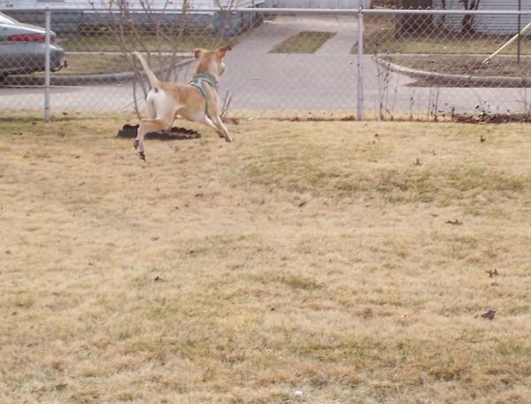 hmmm, part deer, perhaps?  ;)
