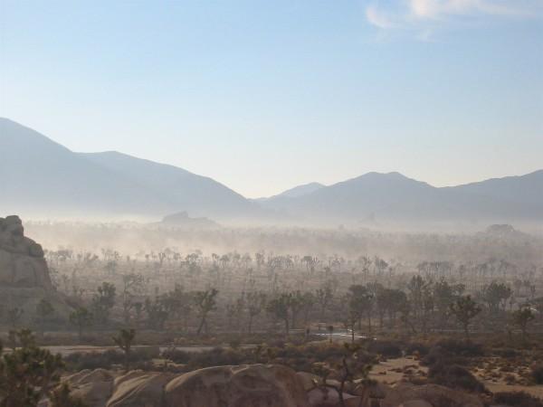 JTree mist