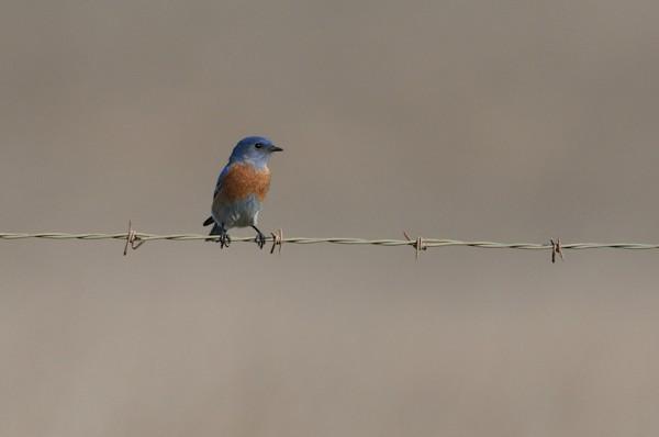 I'm a bluebird, I'm a bluebird...