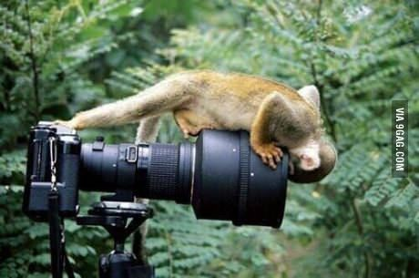 Bush monkey selfie
