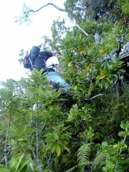 Thom negotiating steep rainforest ABOVE the Exploradores.