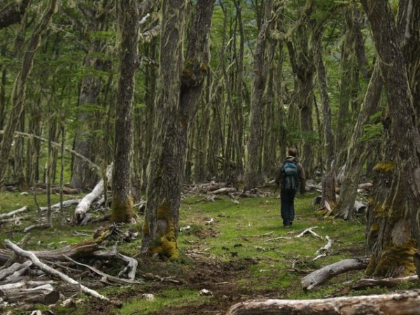 Brad McMillon strolling thru an enchanted forest.