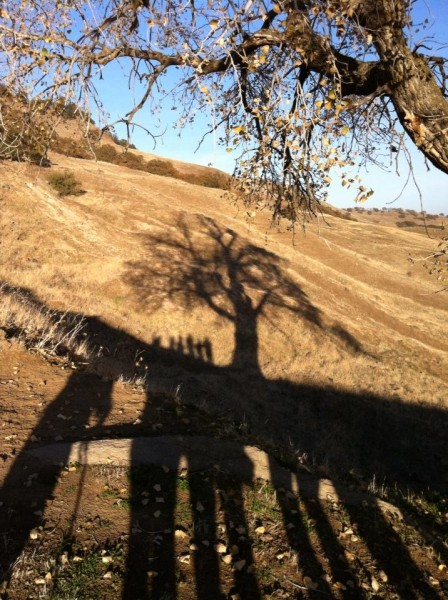 Long   shadows, Sutter Buttes.