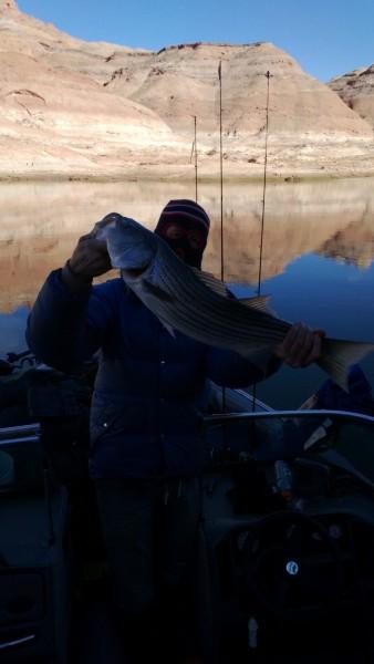 "Striped Bass / Lake Powell.  30"" / estimated 10 pounds"
