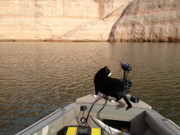 It's all in the fish finder. <br/> Sylvester is an '06 Wildcat Model.