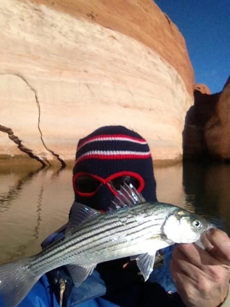 Baby striped bass.