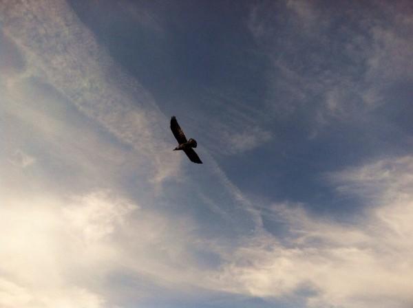 Lands End Raven 12/13