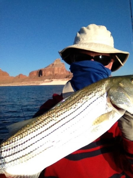 Striped Bass, Padre Bay, early June '13
