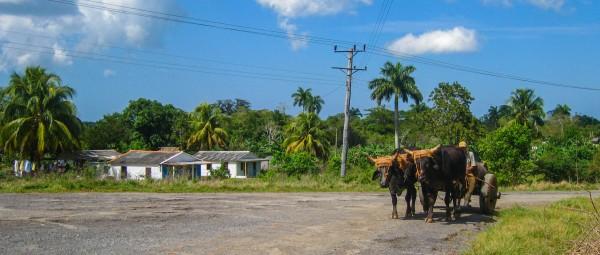 A farmer and oxen