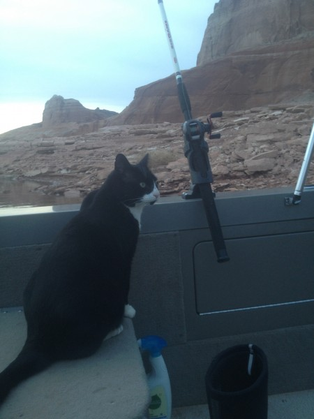 Sylvester the Fish Finder