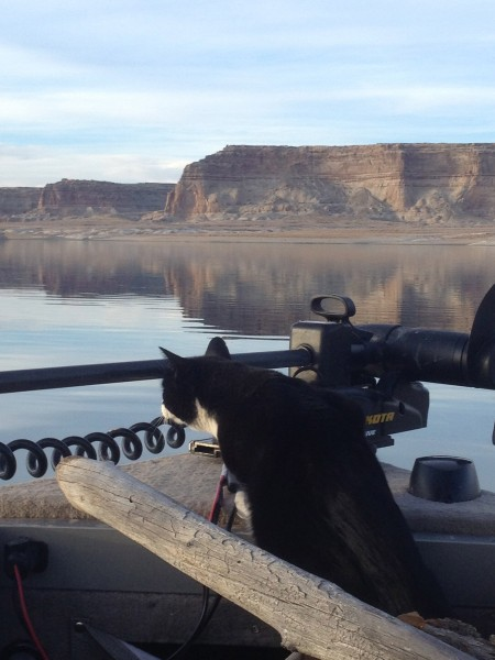 First Mate Sylvester, looking for fish on Lake Powell, Utah.