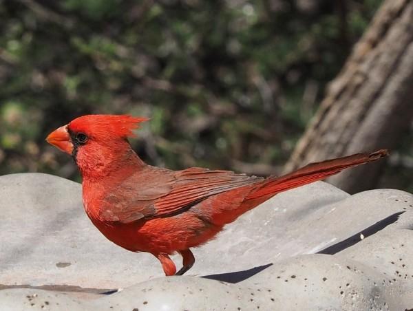 Mystery Bird. :-)