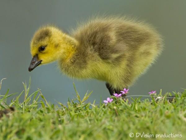 A Gooseball ;-)