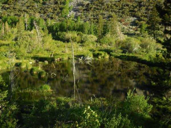 Beautiful meadow on the hike in