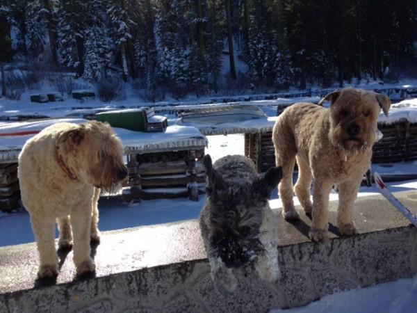 Ginger, Josie & Gus