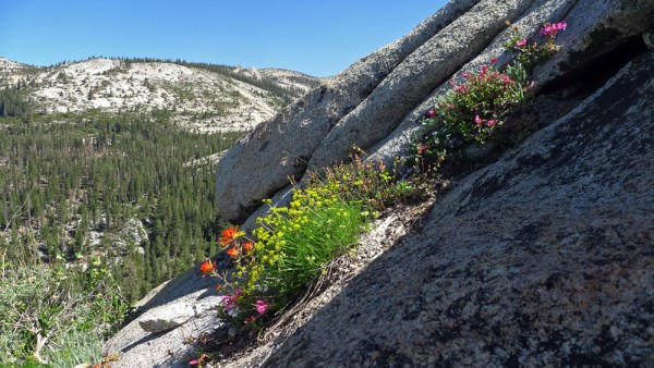 Sierra high country rock garden