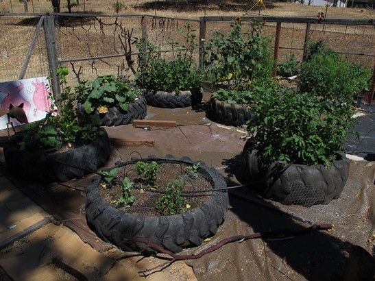 Recycled Tractor tires used as raised beds.