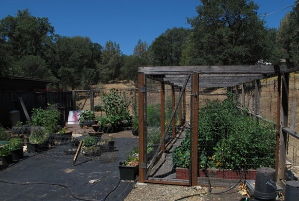 "Raised beds & tractor tires. A ""cat cage"" that once shielded a pet cat..."