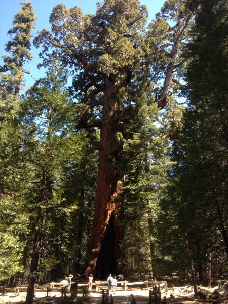 Thats a big tree.