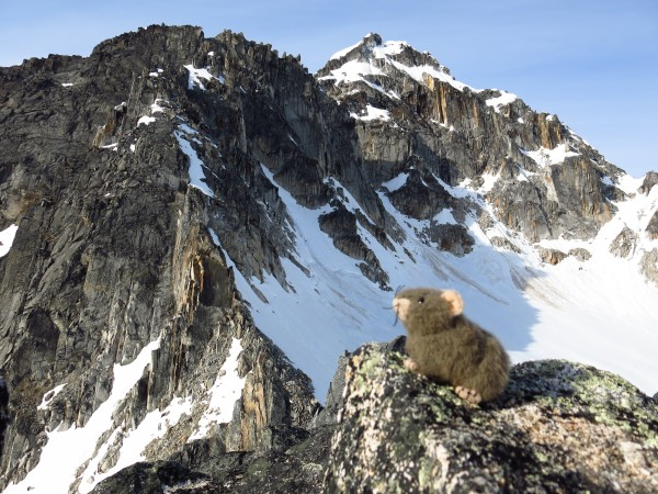 Jackson the Pika, commenting on how the recent warming trend has contr...