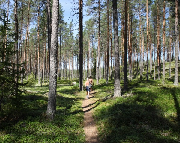 Walking through the forest