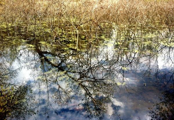 Locust Grove swamp, Poughkeepsie