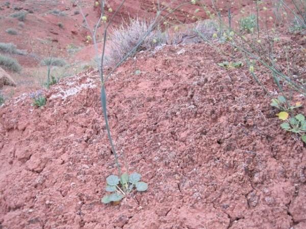 Cryptogamic soil