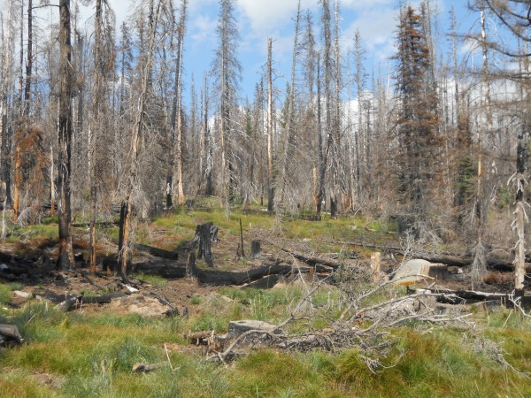 Miles of burned trees at Mt. Adams, up beyond 6,000'