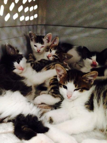 Bunch o kittens