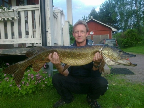 Gjedde 10,8 kg, caught in Rotna, June 2013