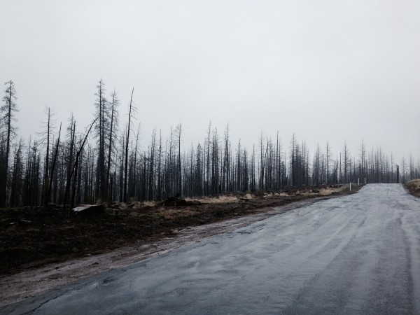 some road torched by the rim fire, taken by my iphone