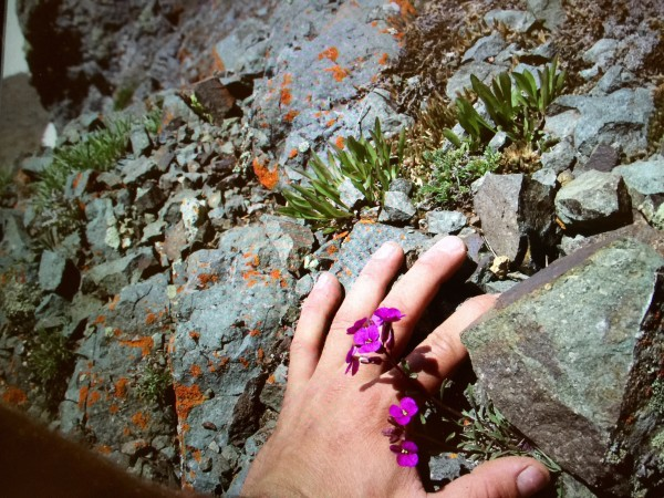 i was stressed and this flower spoke calm <br/> just past the crux on a ne...