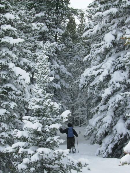 2-14-2010  Snowy Range