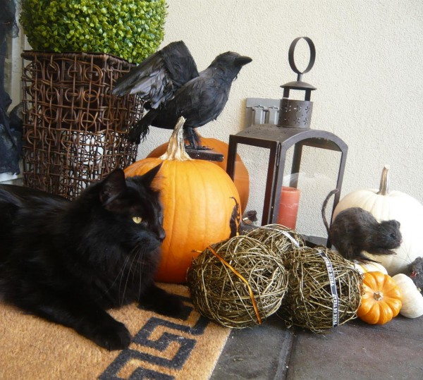 Amazing we got our cat Charlie to pose for the Halloween photo ;) ...