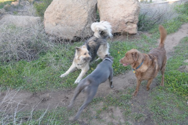 doing what dogs do best. at stoney with blue & sol