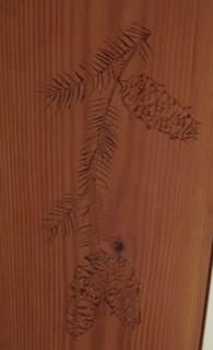 douglas fir--needles and cones
