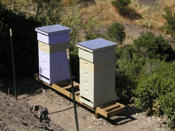 Our two hives.